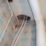 Breaches of fire compartmentation